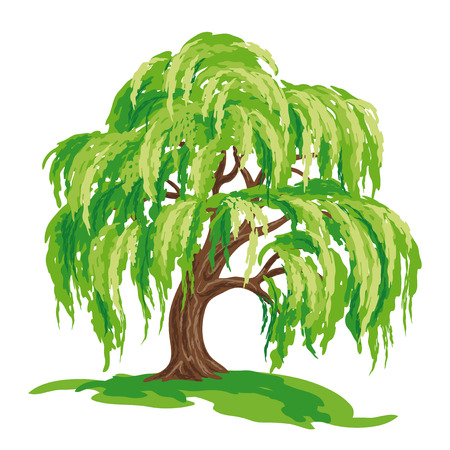 Vector drawing of willow tree. EPS8.