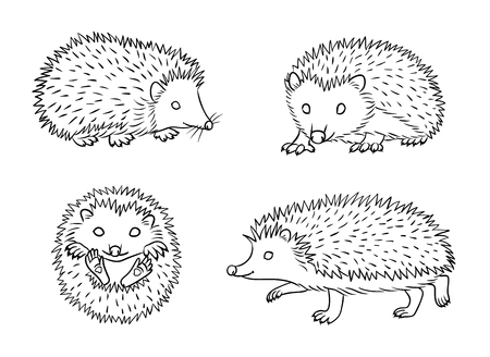 Cute hedgehogs in outlines. Vector illustration. Çizim