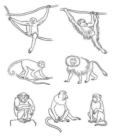 Set of different monkeys in outlines. Vector illustration.