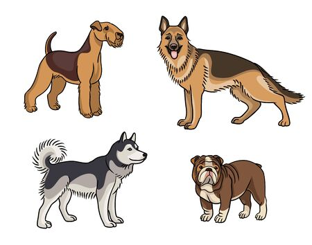 Dogs of different breeds in color (welsh terrier, german shepherd, husky, bulldog) Çizim
