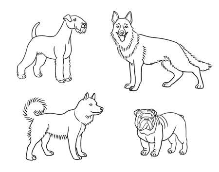 Dogs of different breeds in outlines (welsh terrier, german shepherd, husky, bulldog)