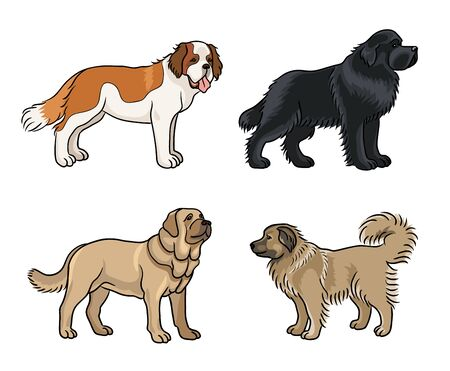 Dogs of different breeds in color (St. Bernard, Newfoundland, Spanish mastiff, Caucasian shepherd) Çizim