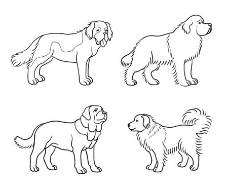 Dogs of different breeds in outlines (St. Bernard, Newfoundland, Spanish mastiff, Caucasian shepherd)