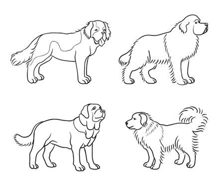 Hunde verschiedener Rassen in Umrissen (St. Bernard, Neufundland, Spanischer Dogge, Kaukasischer Schäferhund)