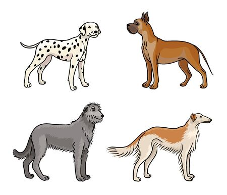 Dogs of different breeds in color (great dane, dalmatian, irish wolfhound, borzoi)