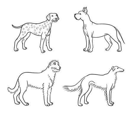Dogs of different breeds in outlines (great dane, dalmatian, irish wolfhound, borzoi)