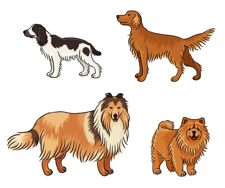 Dogs of different breeds in color (russian spaniel, irish setter, collie, chow-chow)