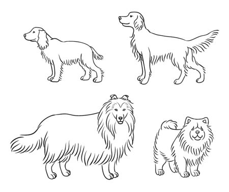 Dogs of different breeds in outlines (russian spaniel, irish setter, collie, chow-chow) Illustration