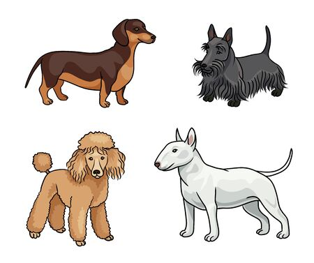 Dogs of different breeds in color (dachshund, scotch terrier, poodle, bull terrier) Çizim