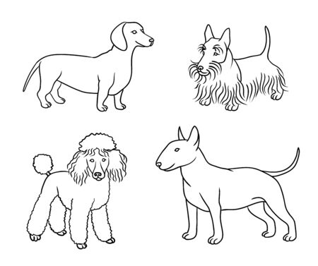 Dogs of different breeds in outlines (dachshund, scotch terrier, poodle, bull terrier)