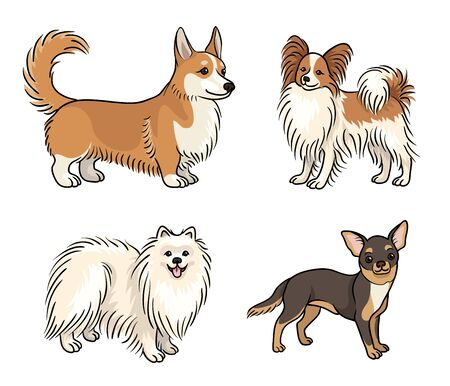 Dogs of different breeds in color (welsh corgi, papillon, Pomeranian, chihuahua)