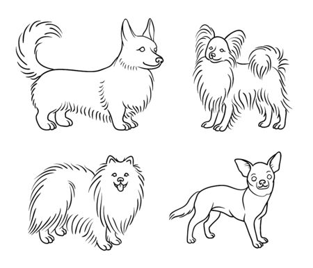Dogs of different breeds in outlines (welsh corgi, papillon, pomeranian, chihuahua) Çizim