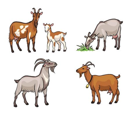 Set of different goats. Vector illustration. EPS8 Çizim