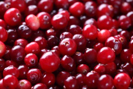 arandanos rojos: Arándanos agrios. De cerca.