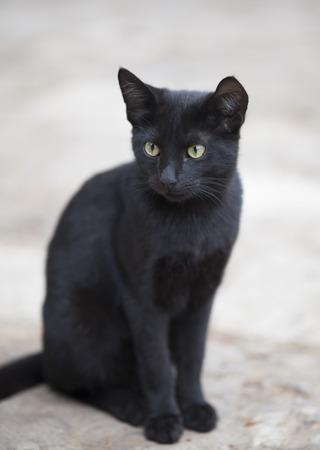 검은 고양이. 스톡 콘텐츠