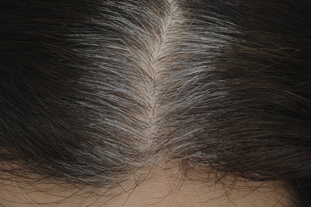 gray hairs: Going gray. Young woman shows her gray hair roots. Stock Photo