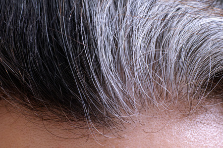 Going gray. Woman gray and black hair roots. Close-up.