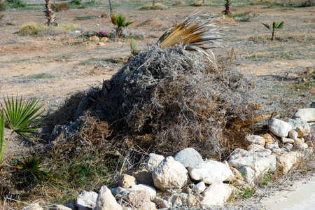 basura organica: Big pile of dry grass, bark and palm leaves on palm field.