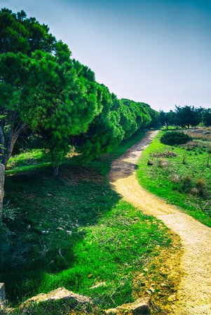 Beautiful landscape with sandy footpath and cedar trees.