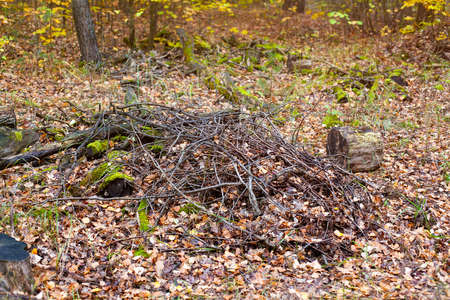 Heap of dry branches in the autumn forest 免版税图像