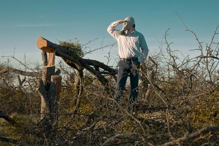 gasmask: Uomo in maschera antigas a guardare gli alberi tagliati