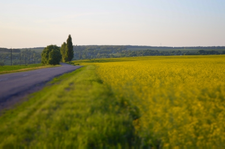 coleseed: field of rapeseed with rural road Stock Photo