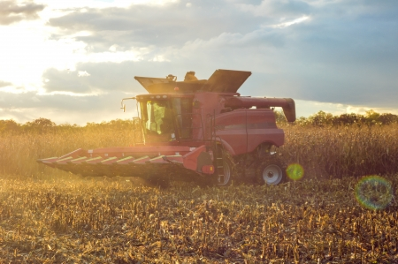 Combine harvesting corn on summer or autumn afternoon industry details