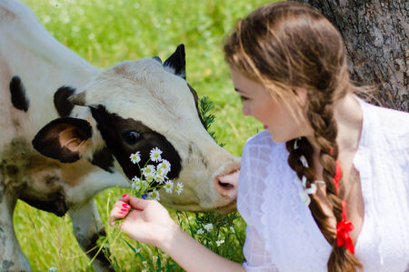 Young pretty woman feeding cow calf outdoors on bright summer day photo