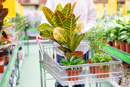 man with trolley choosing pot plants in gardening department store supermarket on the shopping shelf background photo