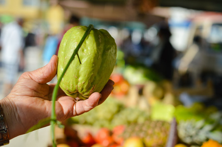 Close up of woman hand holding xuxu or chayote at street farmers market on a sunny day background