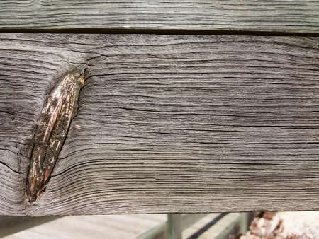 antique furniture: Abstract wooden detailed surface grungy textured background, Close-up photography