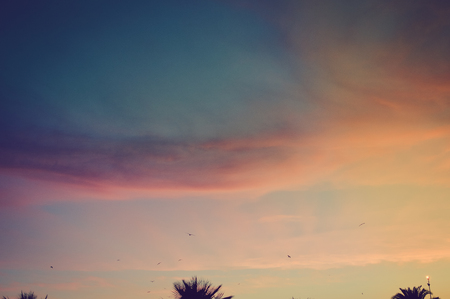 Sunset over palm trees silhouette on natural copy space background Stock Photo
