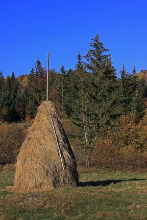 Haystack in glade after reap. Warm sunny autumn day