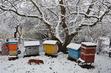 Dog dachshund named Bim among the hives in the winter garden