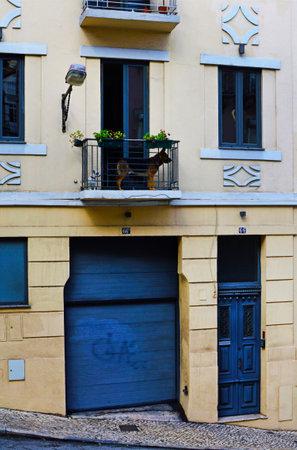 Two dogs on the balcony of a house on the #66A/66 rua da Conceican da Gloria in Lisbon, Portugal. November 01, 2018. Editorial photo Editorial