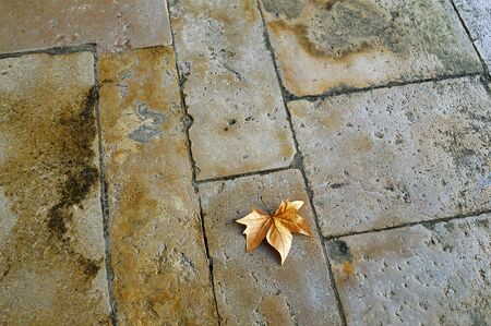 Dry maple leaf on the stone floor of the yard