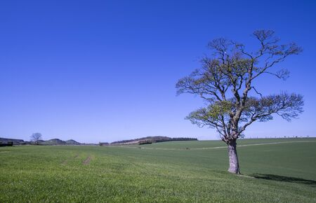 lothian: Lone tree in beautiful countryside landscape in East Lothain, Scotland Stock Photo