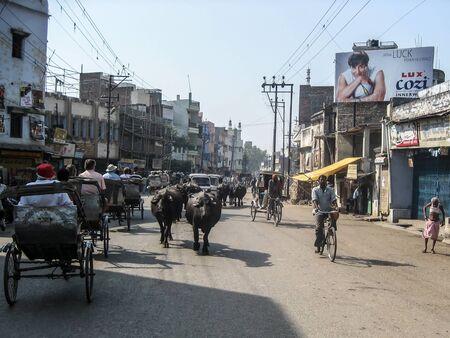 benares: Varanasi, India - 17 April 2007 - Cows mix with rickshaws in the busy streets of Varansi Editorial