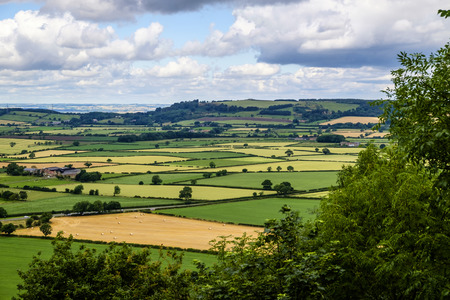 hedgerow: Patchwork quilt of green and gold fields in the North Yorkshire countryside Stock Photo