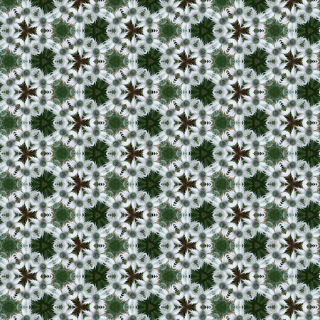 spiky: Green and white Sea Holly or Eryngium spiky flowers in a tileabe seamless repeat pattern