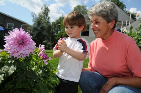 grandmother and grandson: A champion dahlia grower shows off one of her flowers, a Penns gift dahlia, to her cute little grandson