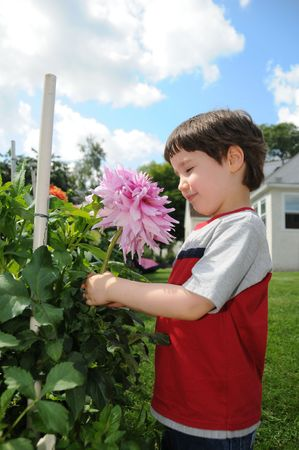 grader: A little boy looks closely at a large Emma Elizabeth dahlia in the backyard of his grandmothers house
