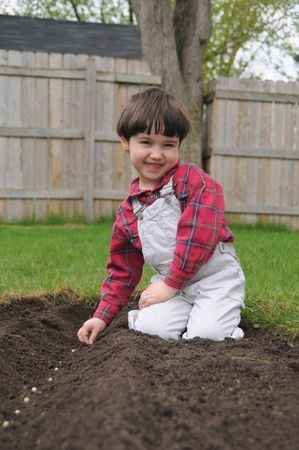 furrow: A little boy smiles as he plants a row of bean seeds in a freshly dug furrow in spring