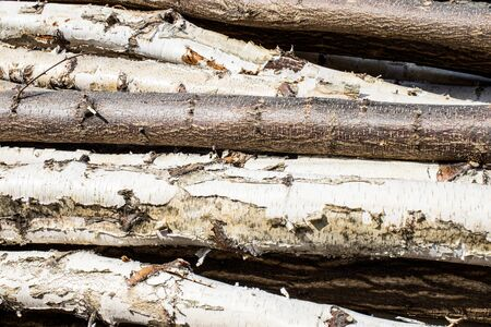 Cutted wood background