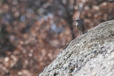 Detailed sparrow on a rock with a background full of lights composition Фото со стока