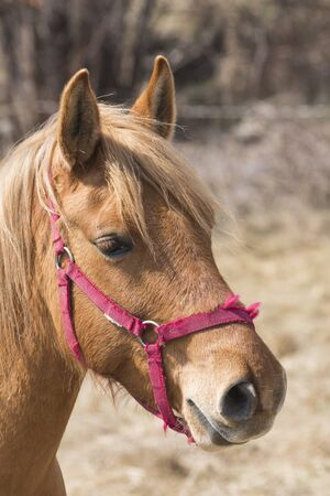 Beautiful horse with orange hair and big ears composition