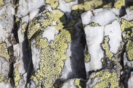 Beautiful detailed white rock full of lichens and veins composition