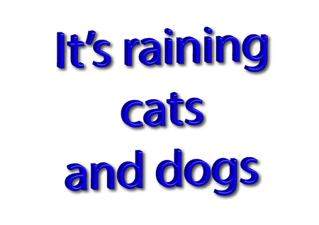 Illustration idiom write its raining cats and dogs isolated in a white background composition