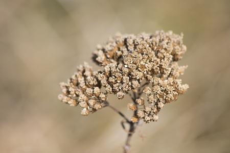 Generic dry vegetation during autumn composition Reklamní fotografie