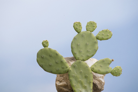 A green prickly pear that seem a person in a blue sky composition